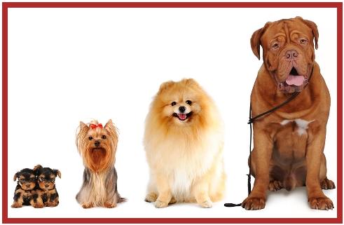 Exceptional Pet Friendly Apartments