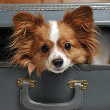 In Need Of Pet Friendly Apartments?